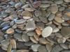 Piedras chatas grandes